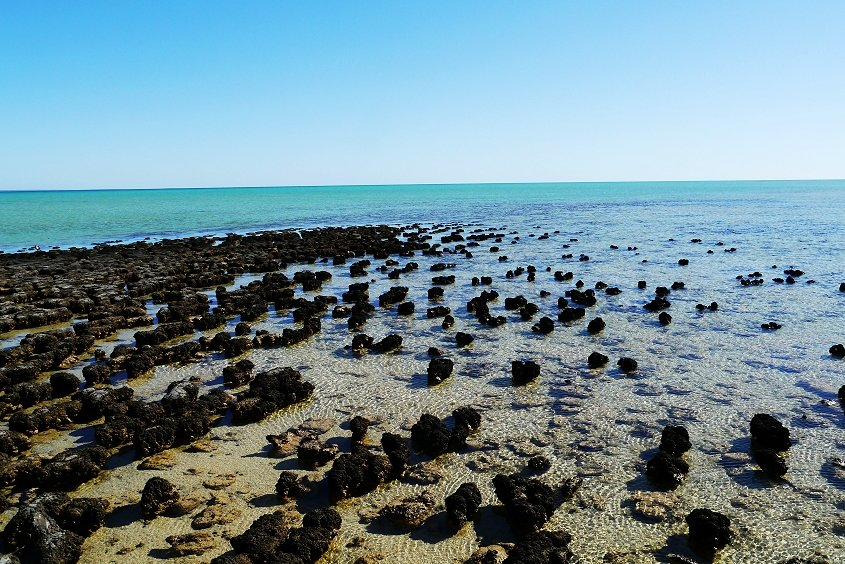 hamelin pool coral coast