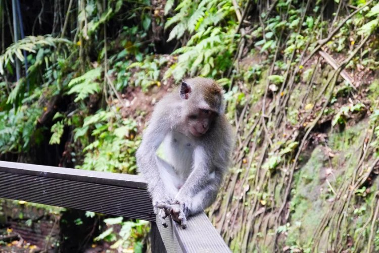 image of monkey sitting on a beam in temple forest Ubud