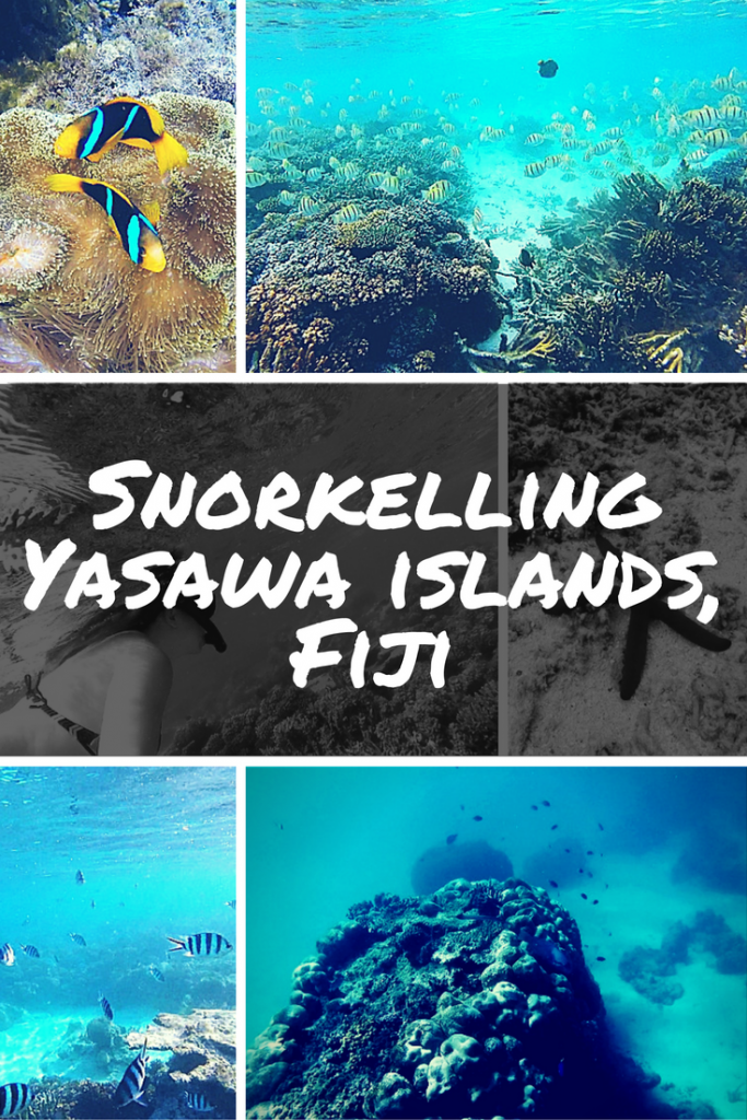 Snorkelling in the Yasawa Islands in Fiji was one of my best travel experiences so far. This post has photos of some of the best things I saw on the coral reefs... including starfish, trigger fish and manta rays!