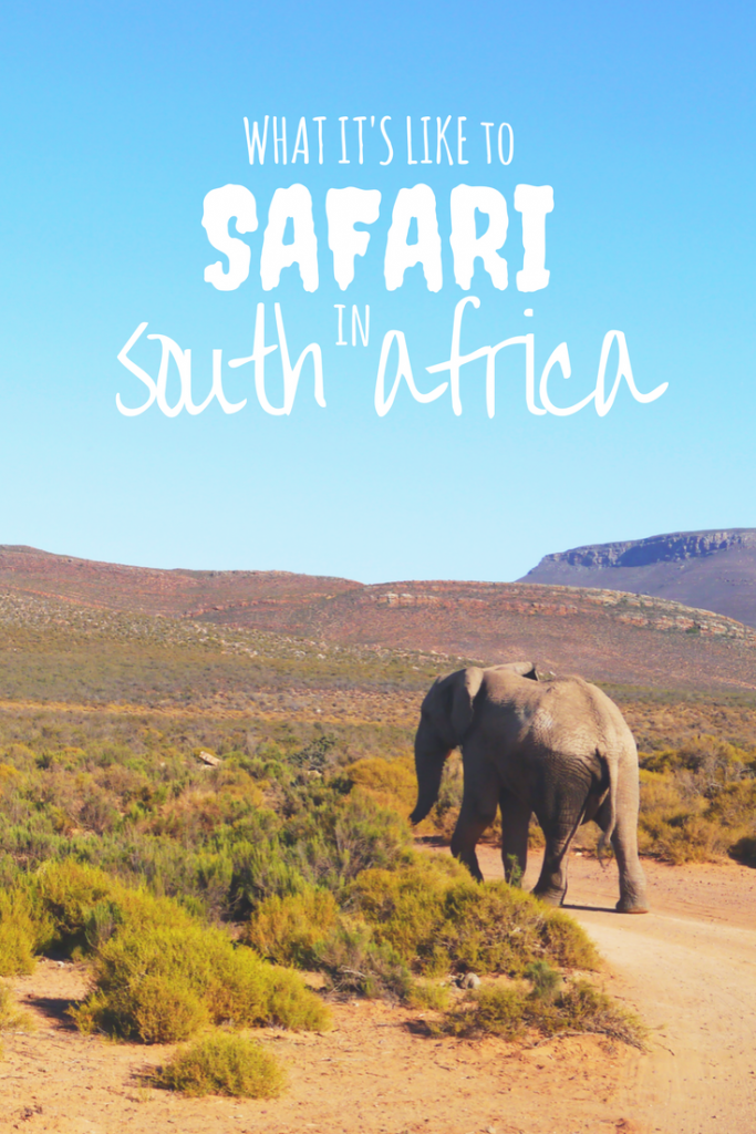 Fulfilling my bucketlist moment of going on safari in South Africa was as dreamy as I expected thanks to our amazing experience at Aquila Game Reserve near Cape Town.