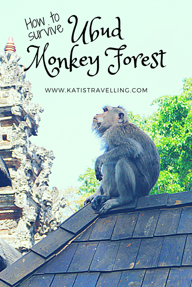 Ensure you have a fun and safe visit to the Ubud Monkey Forest in Bali by getting clued up on how to avoid any cheeky monkey incidents...