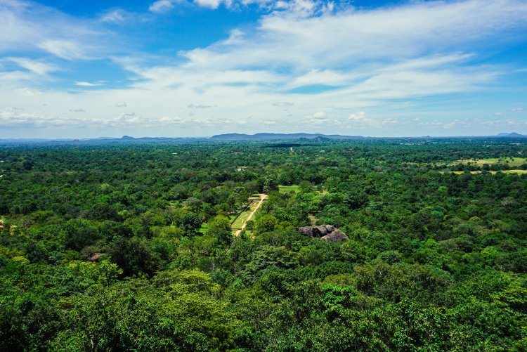 Image of the view from halfway up Sigiriya Rock in Sri Lanka