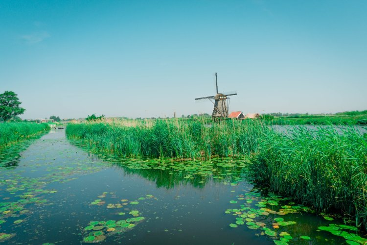 Image of water canal with long green grass and Kinderdijk windmills
