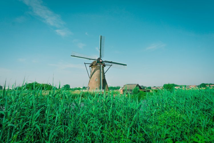 Image of Kinderdijk windmill in grassy field